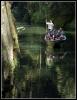 soutěsky řeky Kamenice