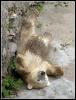 lední medvíďata